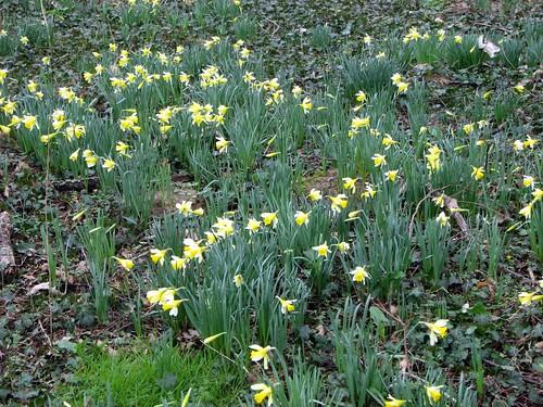 Bientôt le printemps !