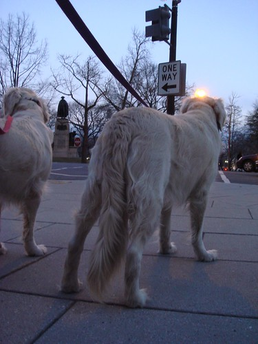 Frisket and Sailor Approach Lafayette Park
