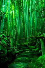 green tea alley (maybemaq) Tags: green nature grass japan stone garden temple kamakura buddhism bamboo silence zen matcha greentea breathtaking eyewashdesign piratetreasure piratetreasure2 piratetreasure3