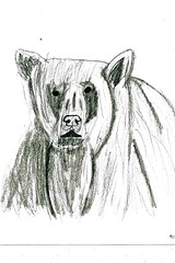 Drawing real animals polar bear B