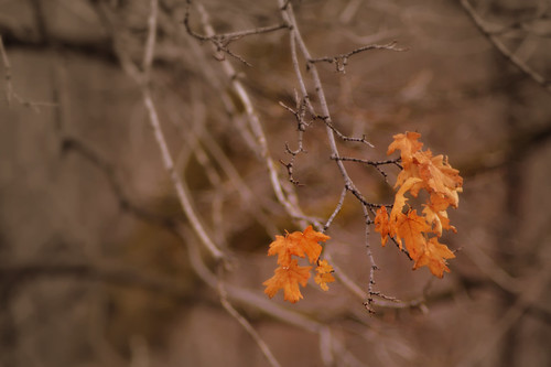 Fall Still Clinging