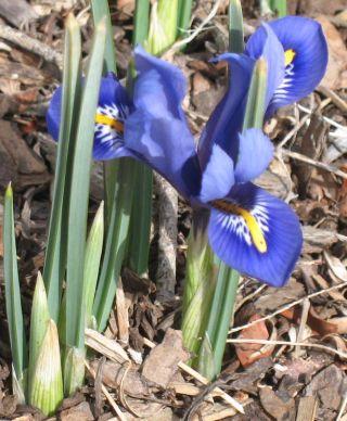IMG_3340 one bloom harmony 31207