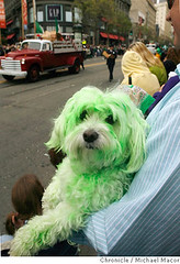 Green dog celebrates St. Patrick's Day