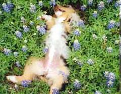 Sleeping Dog in Flowers