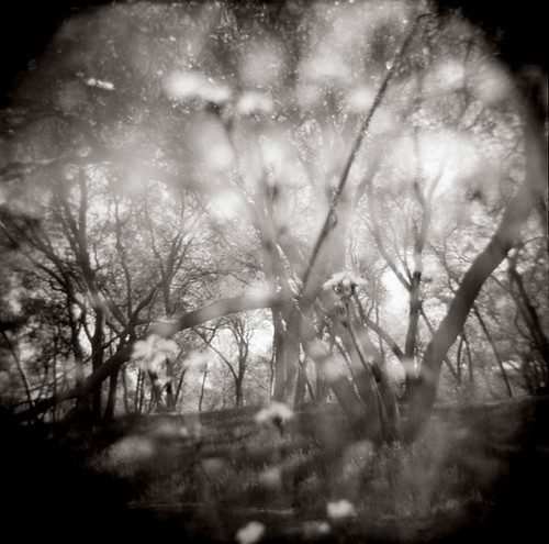Untitled Holga photograph by Therese Brown