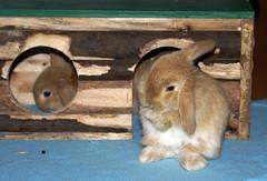 Bunnies (Sjaek) Tags: pet cute rabbit bunny bunnies animal furry adorable fluffy rabbits