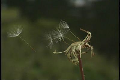 Thêm một chút cho hoa Bồ Công Anh - By Boong Boong - Yahoo 360! 430193712_3d1a21e47d