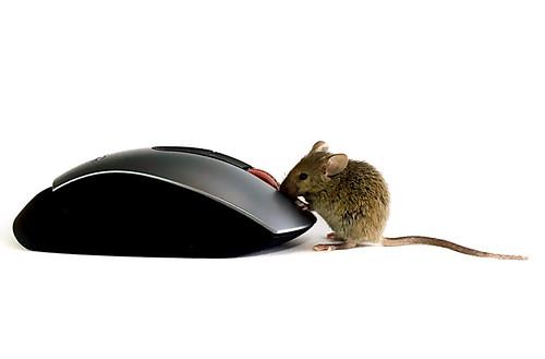 この前半蔵門線の渋谷駅でネズミがチョロチョロしてました。