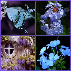 It is blue-butterfly day here in spring ~ Robert Frost, (Cabinet of Old Secret Loves) Tags: fdsflickrtoys