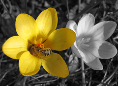 Busy Bee - by Steffe