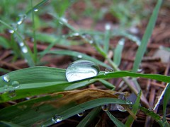 Morning sprinkle (rj california) Tags: hardinguniversity searcy searcyarkansas water drops waterdrops grass rodolfohernan20 challengeyouwinner