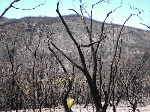 GRAMPIANS FIRE NEAR JIMMYS CREEK