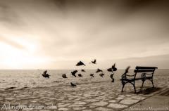 La panchina (alessandra mogorovich) Tags: sea blackandwhite birds sepia waves quality pigeons flight parkbench biancoenero seppia bwdreams fivestarsgallery diamondclassphotographer flickrdiamond megashot
