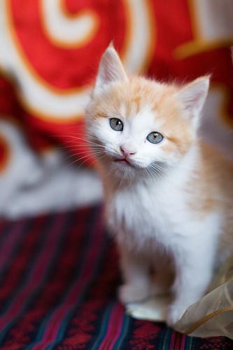 anak kucing mata cantik