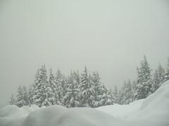 Fog and snow (Just Peachy!) Tags: oregon mthood snowshoeing timberlinelodge bestnaturetnc06