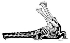 supercroc skeleton