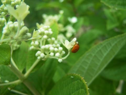 7-9-ladybug