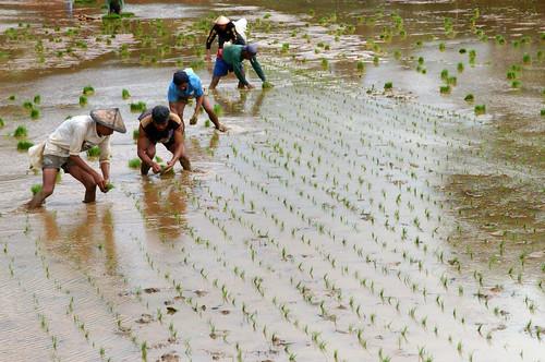 farmer worker r...