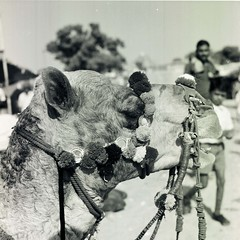 Rajasthan, India #1. (ndnbrunei) Tags: travel blackandwhite rolleiflex rolleigallery