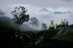 A PASTORAL FANTASY (steinliland) Tags: bravo breathtaking questfortherest lofotenislands themoulinrouge removedfromnikkorfortags abigfave platinumphoto impressedbeauty aplusphoto firsttheearth diamondclassphotographer goldenphotografer allxpressus 100commentgroup atomicaward magicunicornverybest