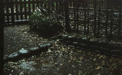 Raining Meiji JIngu