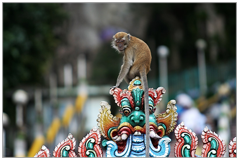 Monkey in Batu Cave