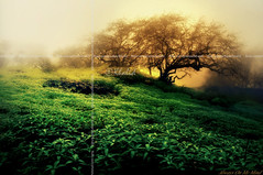 Draw me a Dream (iKhalid) Tags: light tree green beautiful fog stone canon painting 350d hope gold bravo been1of100 dream oman khalid qatar 2007 questfortherest salalah naturesfinest qtr dreamjournal blueribbonwinner  splendiferous magicdonkey  arabianpeninsula alwaysonmymind abigfave artlibre superbmasterpiece goldenphotographer treesubject diamondclassphotographer flickrdiamond megashot omansalalh alemdagqualityonlyclub
