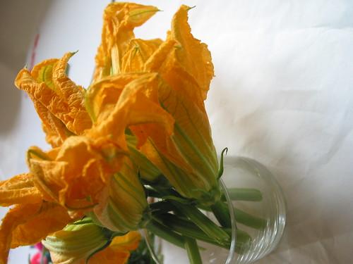 stavo cercando dei bei fiori per i miei Blog, rose, orchidee, camelie...mi sono capitati questi... li metto a voi...siete spiritosi vero? dans una bella rosa 382793590_073f382e2a