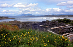 Long Beach, Tofino, Vancouver Island (Jeff L.2007 (Laverton Images)) Tags: travel canada beach landscape spring britishcolumbia scenic vancouverisland tofino wildflowers wilderness westcoast rimoffire nikonf3 mothernature pacificcoast canadiana pacificrim naturephotography pacificrimnationalpark thebestplaceonearth beautifulbritishcolumbia naturepictures supernaturalbritishcolumbia keepexploring naturephotographs jeffl2007 vancouverislandtourism tofinotourism abeautifulseaside britishcolumbialandscape