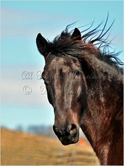 A Natural Dignity (Mary and her camera) Tags: blue winter horse beautiful grass sunshine clouds day skies tennessee profile wispy naturesfinest specanimal impressedbeauty superbmasterpiece superhearts wtmwgroupicon