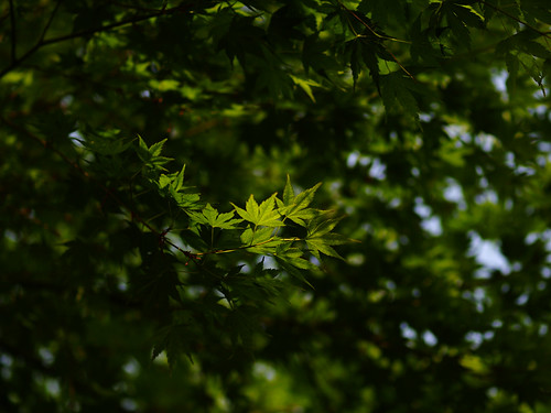 Green colored leaves