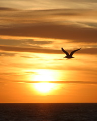 Tight Sunset (Kirsten M Lentoft) Tags: sunset topc25 topv111 denmark seagull gull momse2600 wowiekawozie kirstenmlentoft