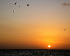 Wait For Me (Musical Mint) Tags: ocean travel sunset summer orange sun bird beach pelicans water beautiful birds yellow island amazing paradise dusk awesome flock carribean aruba stunning helluva blueribbonwinner