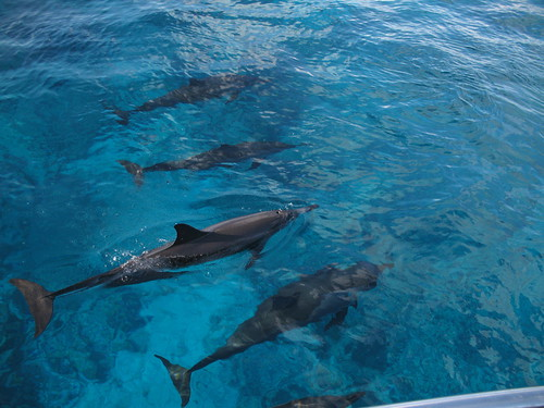 IMG_2189 dolphins