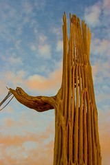 Saguaro National Park - 06 (Tucapel) Tags: cactus tucson saguaro saguaronationalpark