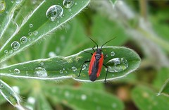 Bug on lupin leaf -      (yoel_tw) Tags: green bug lupine  abigfave