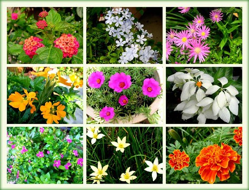 garden flowers names  home design and decorating, Beautiful flower