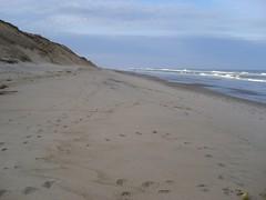 such a big beach