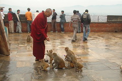 The Monk and Monkeys of Swayambhunath