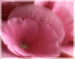 Pink Test (Kirsten M Lentoft) Tags: pink flower topc25 closeup experiment crop frame photofiltre colorphotoaward momse2600 kirstenmlentoft