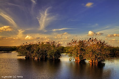 The Florida Everglades - HDR (Michael Pancier Photography) Tags: nature landscape florida everglades evergladesnationalpark nationalparks hdr fineartphotography naturephotography seor sloughs naturephotographer anhingatrail floridaphotographer pancier michaelpancier michaelpancierphotography impressedbeauty royalpalmvisitorcenter wwwmichaelpancierphotographycom seorcohiba