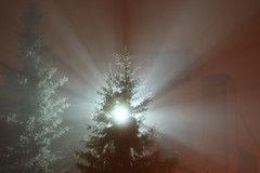 a light in the foggy night