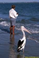 pelican_and_fisherman