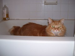 Zoid in the tub