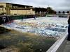 Pool (animusicsf) Tags: graffiti treasureisland sd600 sfphotomeetup
