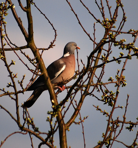 Helen's photo of a pigeon