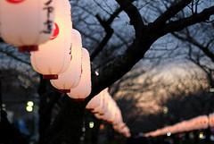 Paper Lantern Street [ 若宮大路 / 鎌倉 ]
