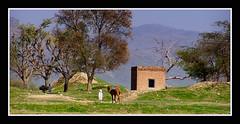 Passing through the Bhir mound (KamiSyed.) Tags: wedding pakistan punjab islamabad weddingphotographer rawalpindi taxila weddingphotography studio9 weddingphotographs weddingpix kamisyed kamransafdar