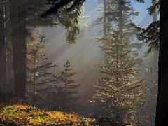 Schneeberg forest - by fabriceh