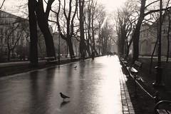 walk in the park (hive mind) Tags: park street blackandwhite bw blancoynegro walk poland krakow streetlife kraków cracow 123bw